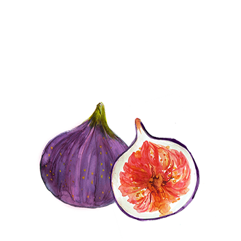 indian fig extract